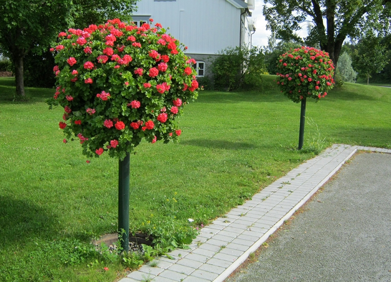 Blomstertre med selvvanning, Brummundal