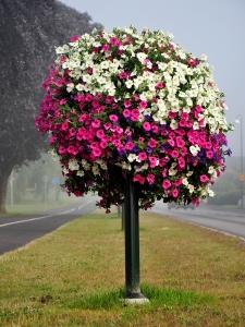 blomstertre_vei_rosa