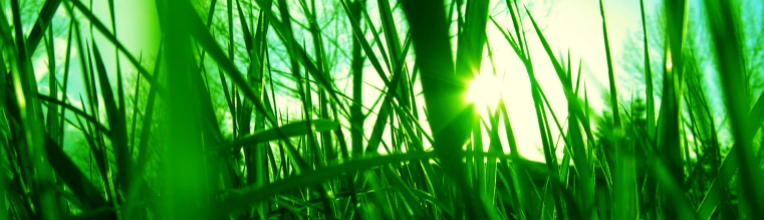 grass_by_transfigurated